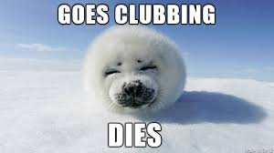 Baby Seal Meme - a baby seal walks into a club imgur