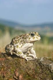 How To Get Rid Of Cane Toads In Backyard I Love This Pic Of A And Her Toad Because I Had A Toad Too