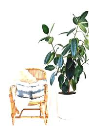 good inside plants modern living room with zamioculcas zamiifolia indoor plant cool