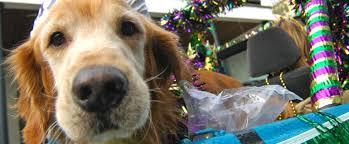 mardi gras dog sandestin events
