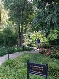 Botanical Gardens Huntington Jungle Garden At Huntington Library Picture Of The Huntington