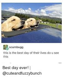Best Day Ever Meme - if scumbugg this is the best day of their lives do u see this best