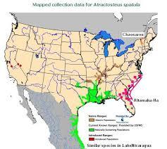 alligators in map frontiers of zoology altamaha ha