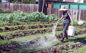 Urban Garden Santa Rosa Buys Property Where Urban Farm Currently Exists In Mission