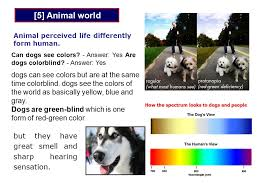 Are All Dogs Colour Blind For The 4 Th Year Students Of Zoology P Ractical A Nimal B