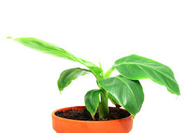 10 houseplants that are surprisingly hard to keep alive bob vila