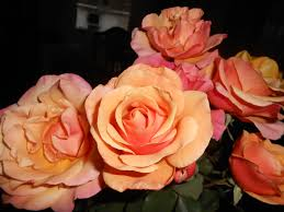 steps for putting roses to bed for the winter things 2 know