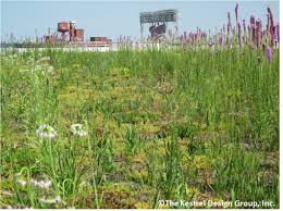 nativ plants file native plants on target center arena green roof minneapolis