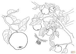 coloring apple tree coloring sheets