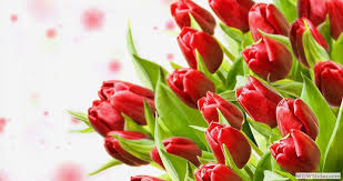 flower delivery colorado springs flower delivery colorado springs co same day flower delivery