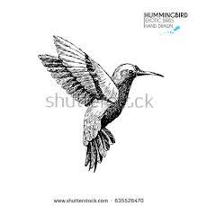 hummingbird vector stock images royalty free images u0026 vectors