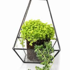 modern glass geometric terrarium pyramid succulent box planter bonsai modern glass geometric terrarium pyramid succulent box planter flower pot eco bottle miniature miero landscape vivaria