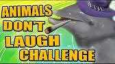 Challenge Zellendust Viral Don T Laugh Challenge Zellendust