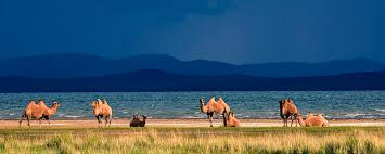 top travel destinations in mongolia