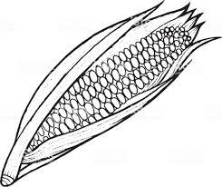 Maïs Coloriage Illustration Dessinés à La Main Page Pour Adultes Et
