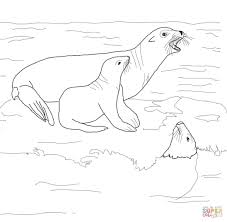 california sea lion with its baby coloring page free printable