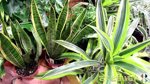 home design house plants indoor at depot youtube in 81