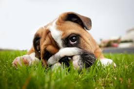 worms in dogs here u0027s everything that dog owners need to know