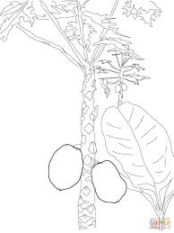 mango tree coloring page free printable coloring pages