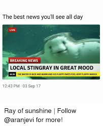 Stingray Meme - the best news you ll see all day live breaking news local stingray