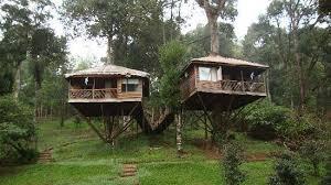 shola tree house picture of shola periyar tree house thekkady