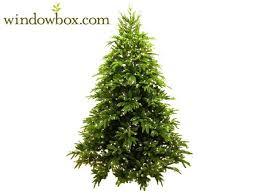 ft asheville prelit frasier fir artificial tree non stop