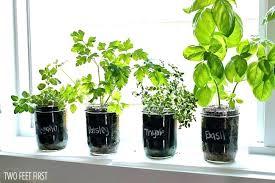 indoor herb garden kits to grow herbs indoors hgtv growing herbs garden herbs for indoor garden growing cilantro