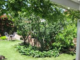 Fruit Tree Garden Layout Designing With Trees Part 1 Japanese Garden Design Trees With