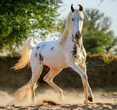 905 best unusual horse markings images on pinterest beautiful