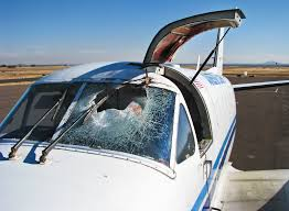 bloody skies the fight to reduce deadly bird plane collisions