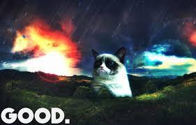 Good Cat Meme - good cat meme cat planet cat planet