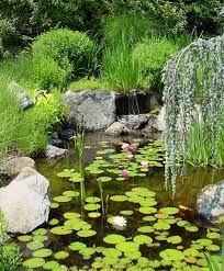 how to plan for a small backyard pond dengarden