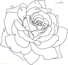 coloring pages with roses fascinating coloring page of a rose free printable roses pages for