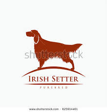 setter stock images royalty free images vectors