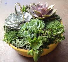 succulent dish garden planter home outdoor decoration