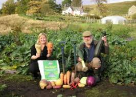 eartheasy blogglacial rock dust boosts vegetable growth and helps
