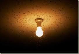 does led landscape lighting attract bugs nightscenes landscape