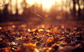 autumn backgrounds wallpaperpulse