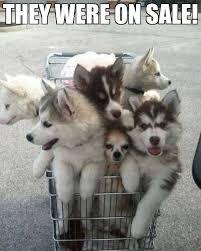 Shopping Cart Meme - 195 best meme dog images on pinterest meme memes humour and funny