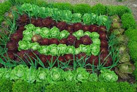 vegetable garden plants decor references