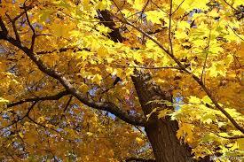 10 trees that any prepper should grow survivopedia