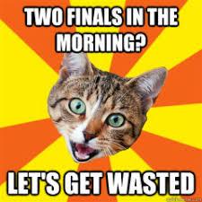 Success Cat Meme - cat meme archives page 427 of 982 cat planet cat planet