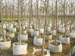 5 read about tree planting gibneyce