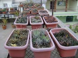 Garden Containers Ideas - plastic dish garden containers ideas home inspirations