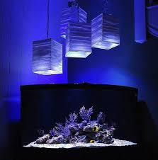 Okeanos Aquascaping Https I Pinimg Com 736x B8 6a 33 B86a3363beecd9e