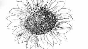 sunflower drawing skillshare projects