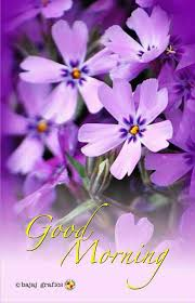 Flower And Love Quotes - good morning good morning pinterest flowers flower and