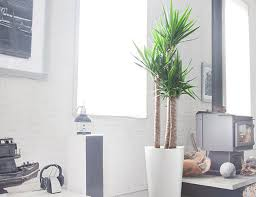 Plants For Office 10 Best Indoor Plants For Men Gear Patrol