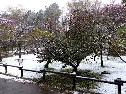 Snow Falls In Tokyo For The First Time In November Since 1962 by Tokyo