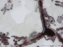 old rocks yield new clues researchers discover oldest records of